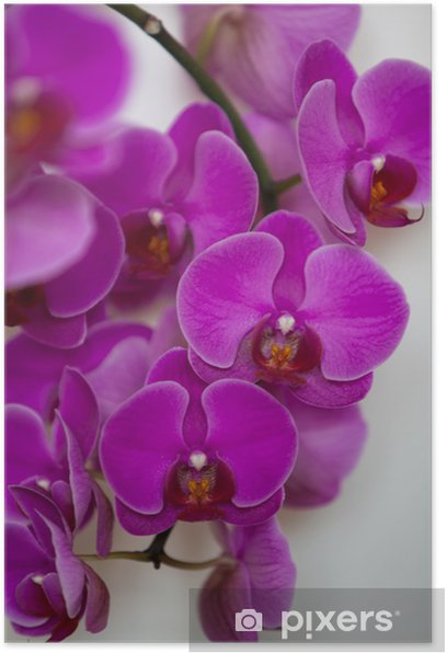 Poster Orchids in Lilac - Thèmes