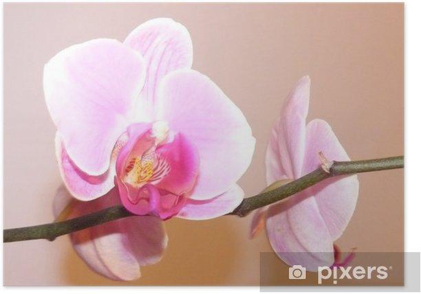 Poster Orchids - Fleurs