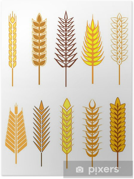 Poster Oreilles de céréales icons set - Agriculture
