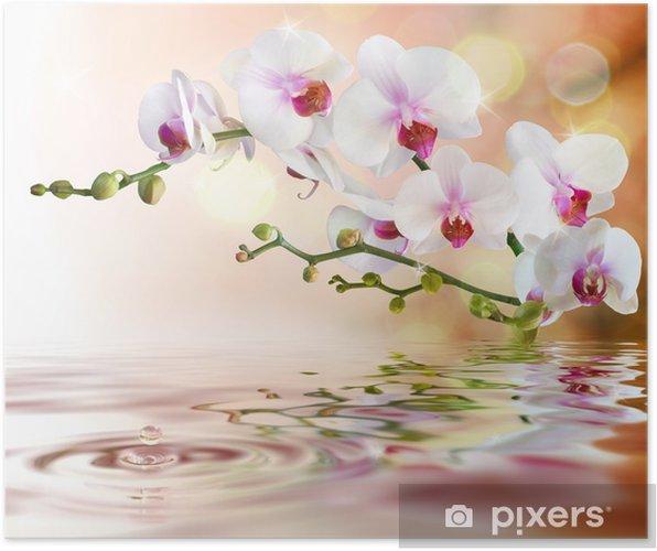 Póster Orquídeas blancas sobre el agua con una gota -