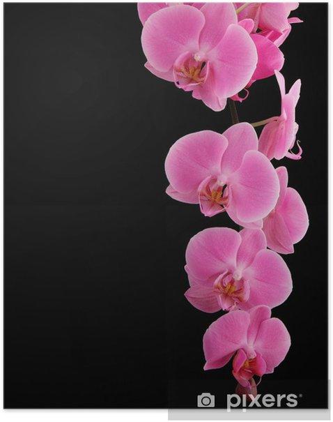 Póster Orquídeas rama sobre un fondo negro - Temas