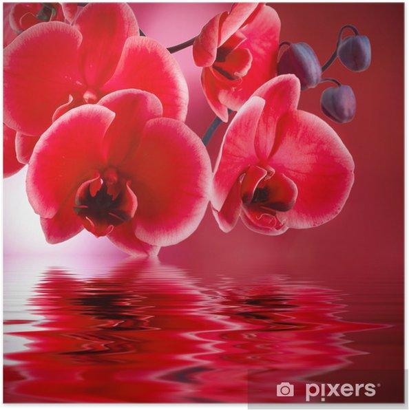 Póster Orquídeas rojas con fondo y agua - Estilos