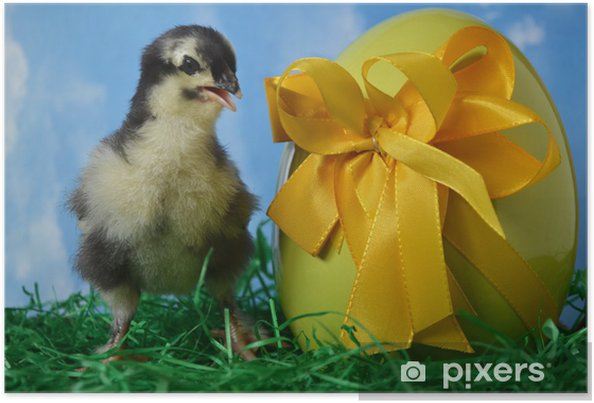 Poster Osterküken (Hühnerrasse Marans) - Fêtes internationales