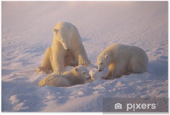 Poster Ours et oursons en basse lumière du soleil polaire arctique - Thèmes