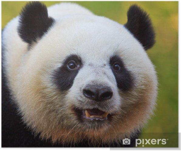 Poster Ours panda ambassadeur chinois - Thèmes