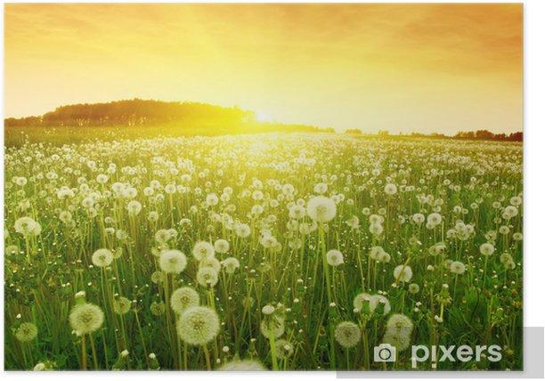 Poster Paardebloemen in weide tijdens zonsondergang. - Thema's