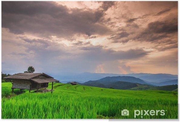 Poster Paddy au coucher du soleil, dans la province de Chiangmai de la Thaïlande - Agriculture