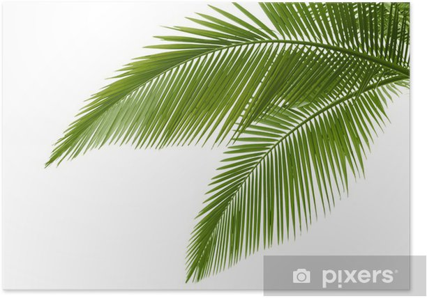 Palm leaves Poster - Trees and leaves