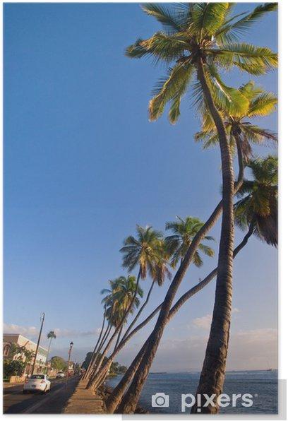 Palm Trees in Lahaina, Maui, Hawaii Poster - America