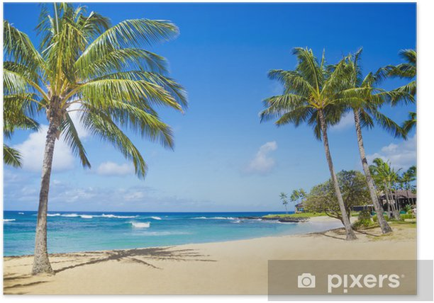 Palm trees on the sandy beach in Hawaii Poster - Palm trees