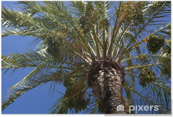 Poster Palmier dans le soleil - Vacances