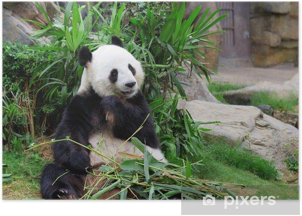 Panda eating bamboo Poster - Themes