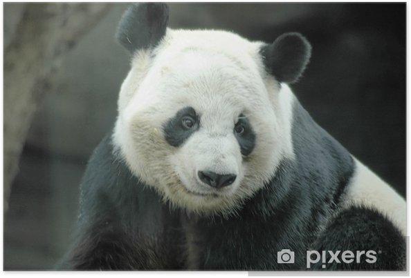 Poster Panda geant - Thèmes