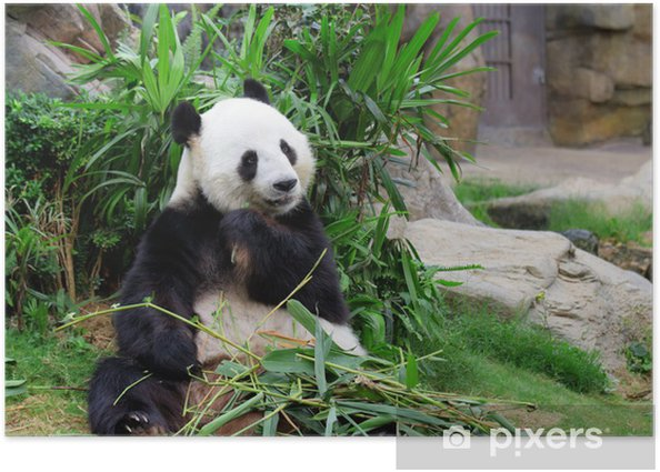 Poster Panda mangeant le bambou - Thèmes