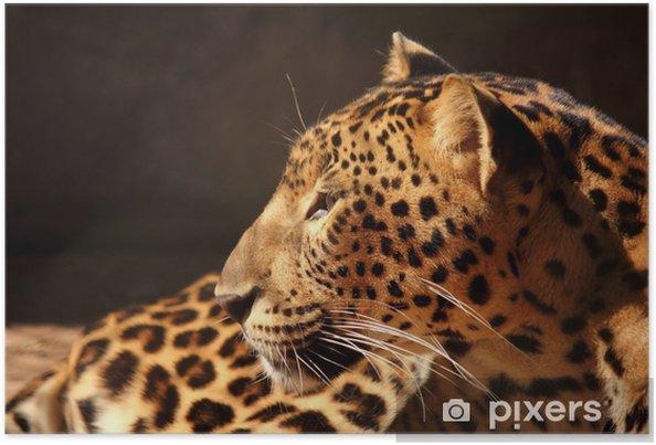 Póster Pantera del leopardo que mira en el árbol - Mamíferos