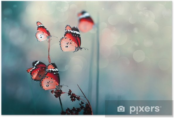 Poster Papillon - Animaux