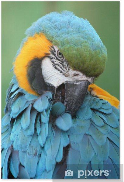 Pappagallo azzurro 2 Poster - Birds