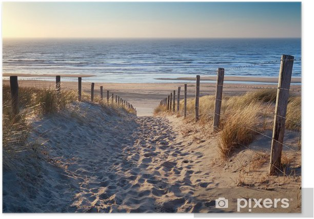 path to North sea beach in gold sunshine Poster - Destinations
