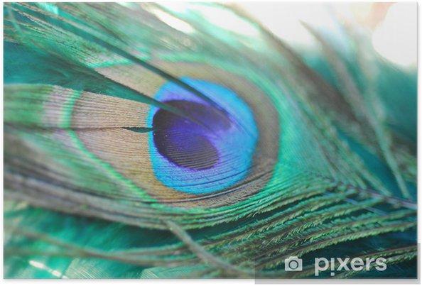 Poster Pauw, veer - Azië