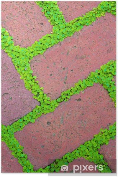 Poster Pavés de brique et la couverture du sol - Maisons et jardins