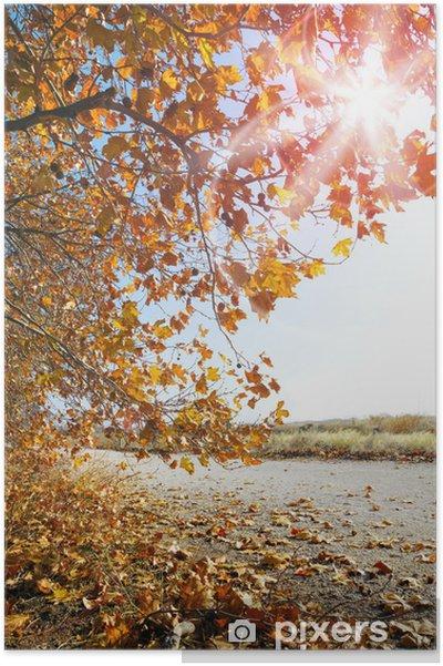Poster Paysage d'automne. Coucher de soleil et les arbres - Saisons