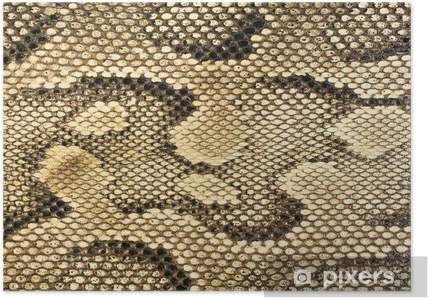 Poster Peau de serpent texture - Styles
