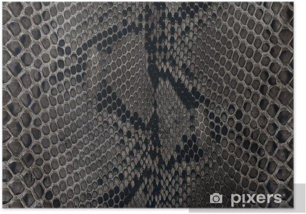 Poster Peau de serpent - Ressources graphiques