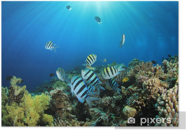 Póster Peces tropicales y arrecifes de coral en la luz del sol - Animales marinos