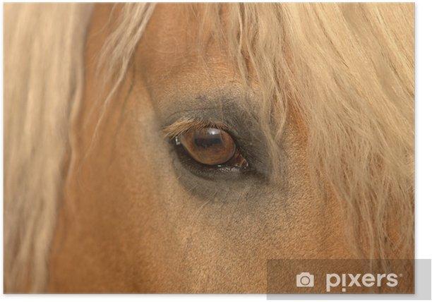 Poster Pferd - Pferdeauge - Mammifères