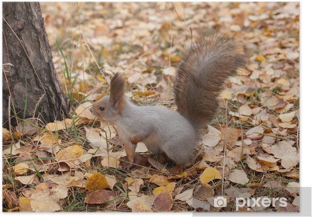 photo of gray squirrel Poster - Seasons