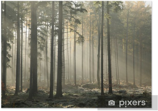 Picturesque autumnal forest on a foggy November morning Poster - iStaging