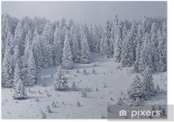 pine forest in winter Poster - Mountains
