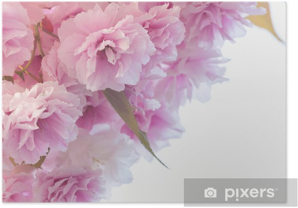 pink flowers Poster - Flowers