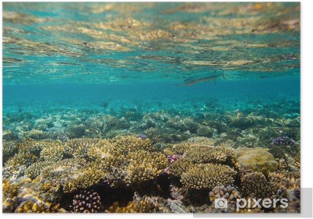 Poster Pipefish - Animaux marins