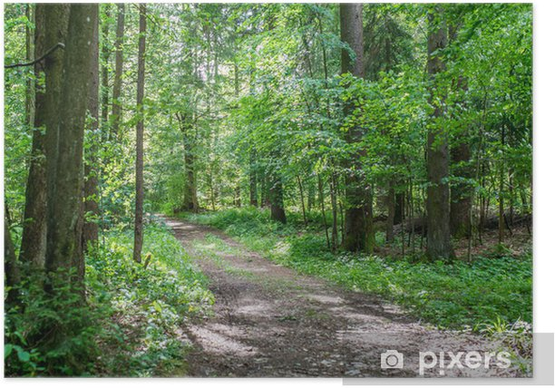 Póster Pista forestal a través de un frondoso bosque verde - Estaciones