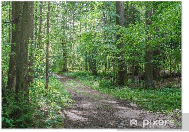 Poster Piste forestière à travers bois verdoyant - Saisons
