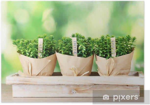 Póster Plantas de tomillo hierbas en macetas con una decoración hermoso papel - Especias, hierbas y condimentos