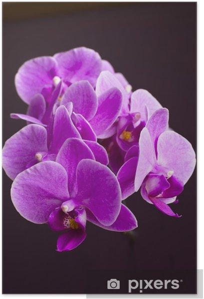 Poster Plantes, orchidée, phalaenopsis, fleurs roses - Thèmes