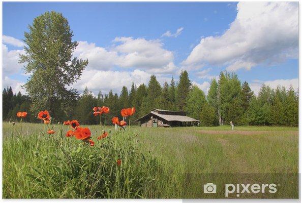 Poster Plants de pavot en face d'une grange - Saisons