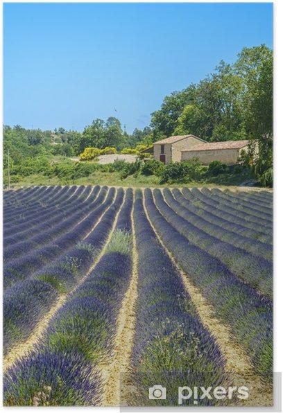 Poster Plateau de Valensole (Provence), lavender - Agriculture