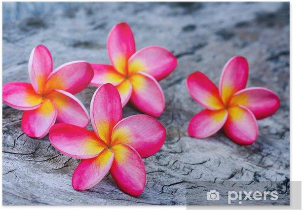 Poster Plumeria. Belle inflorescence rose - Fleurs