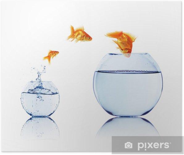 Poster Poisson rouge dans un bocal à poissons - iStaging