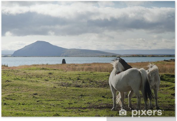 Poster Poneys en Islande paysage - Europe