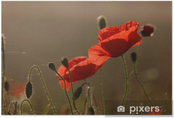 Poster Popies - Fleurs