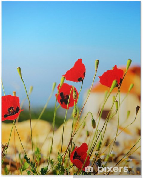 Poster Poppy fleurs de prairie - Fleurs