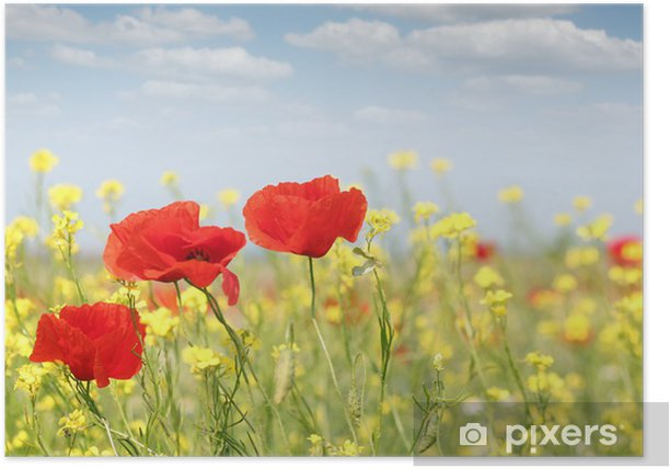 poppy flowers nature spring scene Poster - Themes