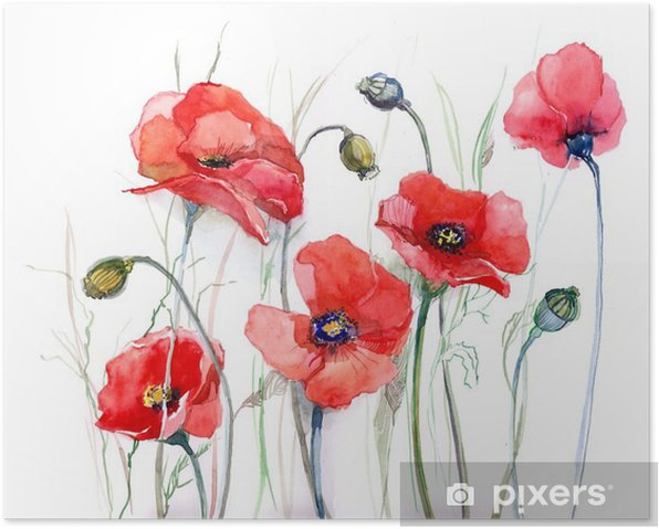 poppy Poster - Nature