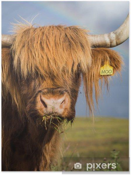 Poster Portrait de vache Highland - Europe
