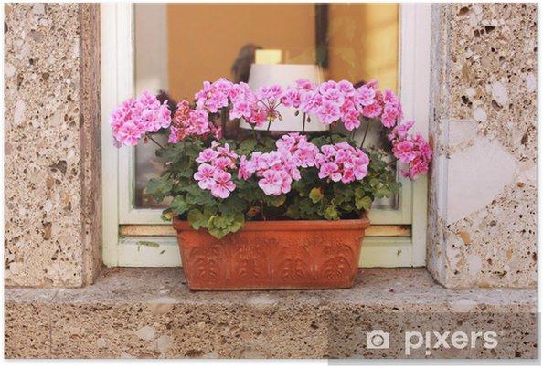 Poster Pot de fleurs avec le géranium - Fleurs