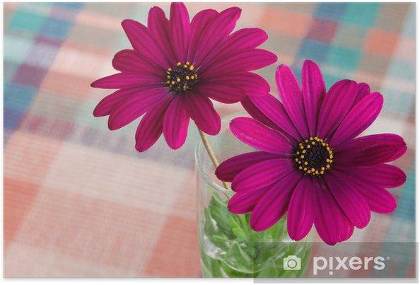 Poster Pourpre de fleur de marguerite - Fleurs